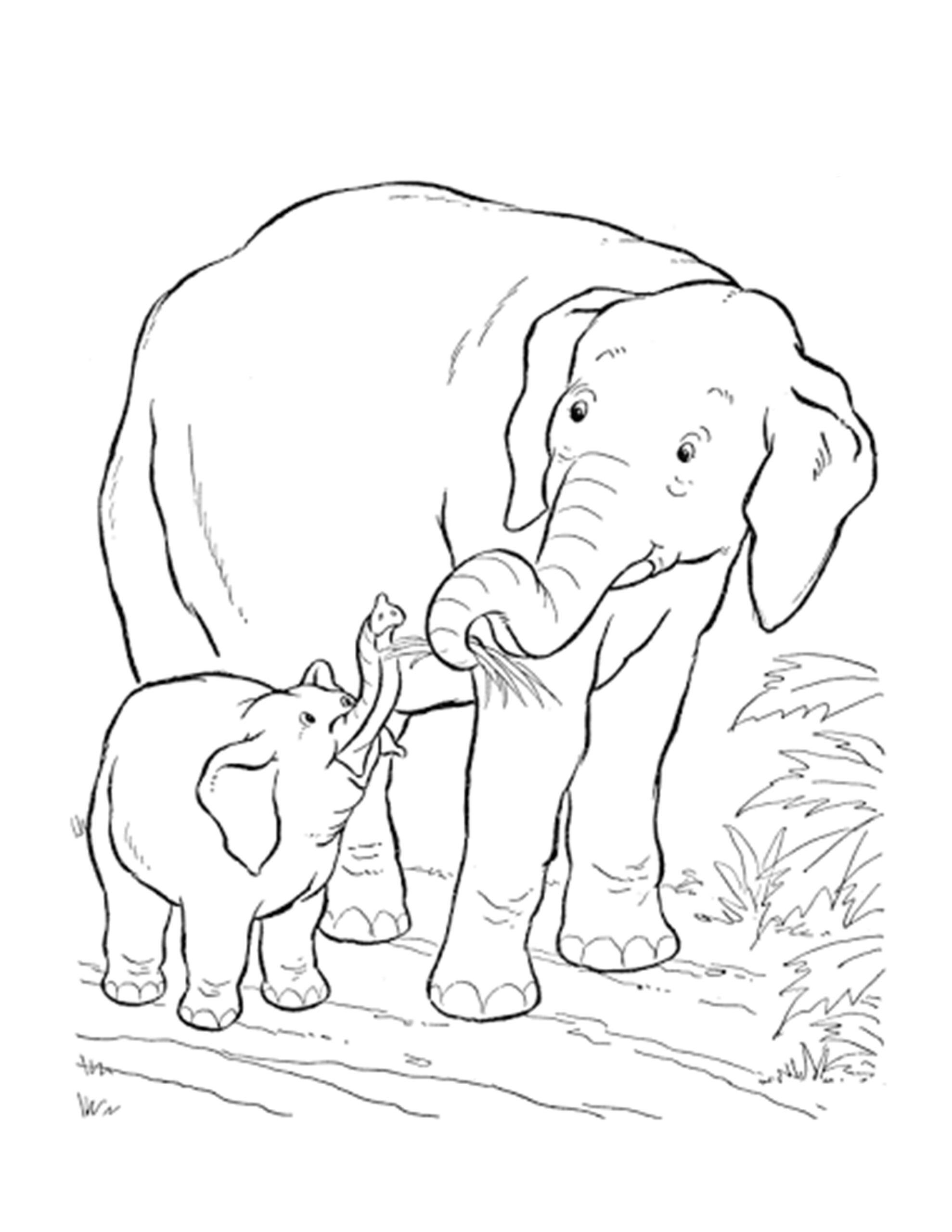 mama olifant met baby olifant